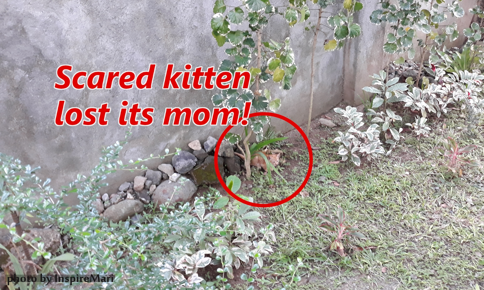 Scared kitten found in garden in the Philippines (2019) photo taken by inspiremari.nl