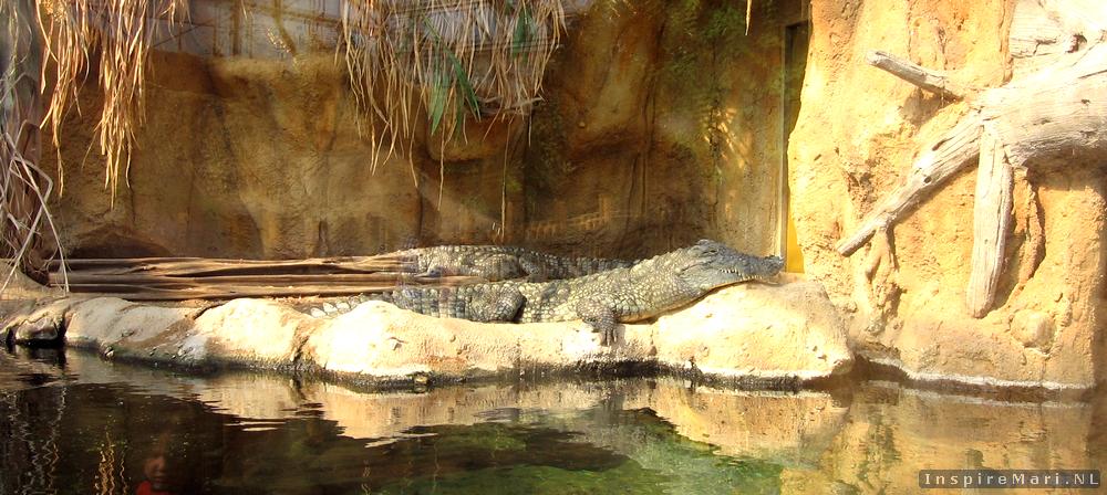 Rotterdam Blijdorp Zoo 2015