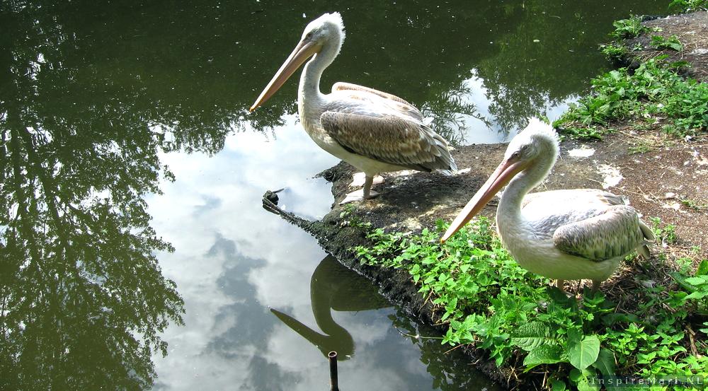 Rotterdam Blijdorp Zoo 2015 Birds