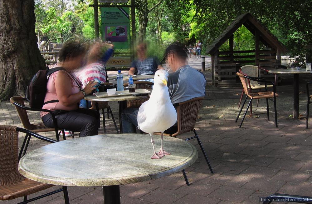 Rotterdam Blijdorp Zoo 2015 Seagull