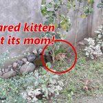 Fake Animal Rescue Videos are a BIG Problem