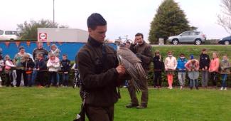 birds of prey demonstration goudswaard the netherlands