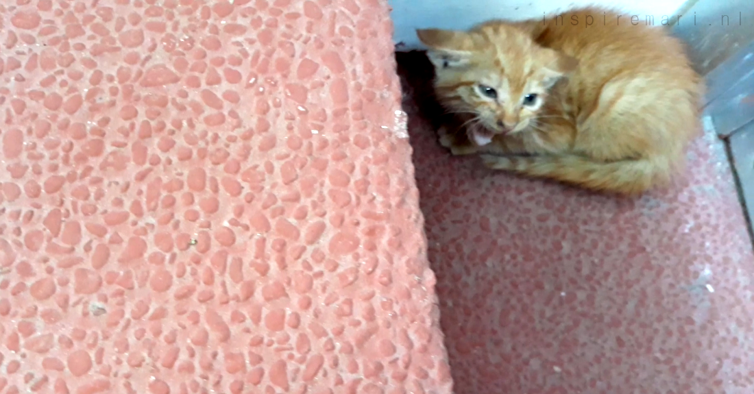 Scared stray kitten in the Philippines (2019)
